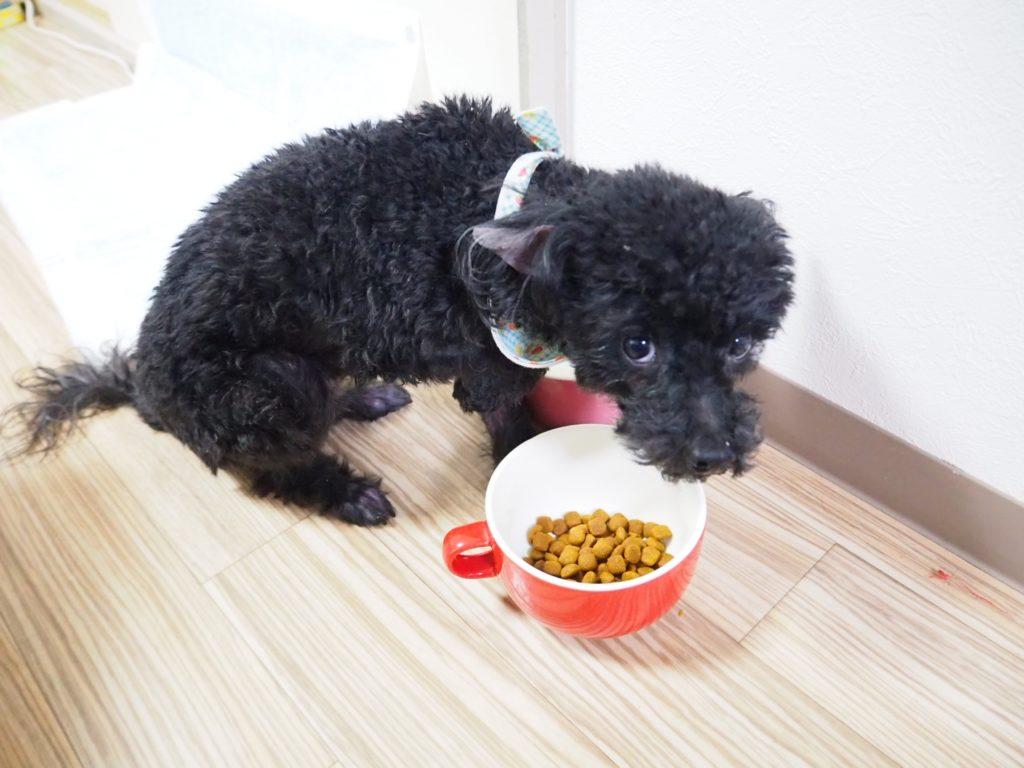 ドッグフードを食べない犬