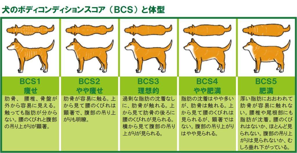 犬のボディコンディションスコア (BCS) と体型