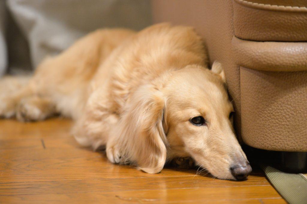 犬が血便でも慌てないで!血便の3パターンと、下痢や嘔吐がある場合 | atpet[アットペット]